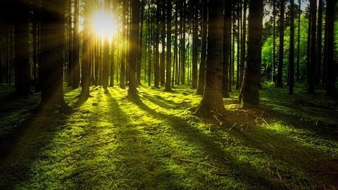 College provincie wil meer bos en groen in Groningen - Promotie Noord